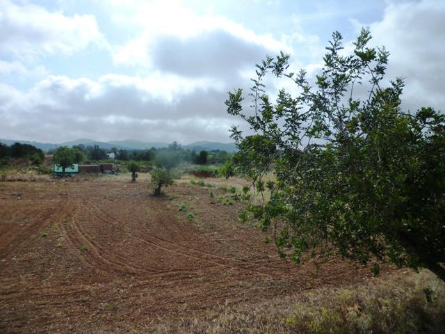 Garten-Villa-San-Carlos