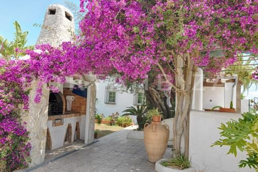 beautiful plants-nice house-Ibiza