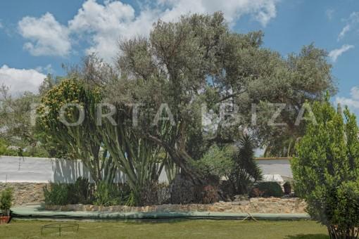nice house-garden & trees-ibiza
